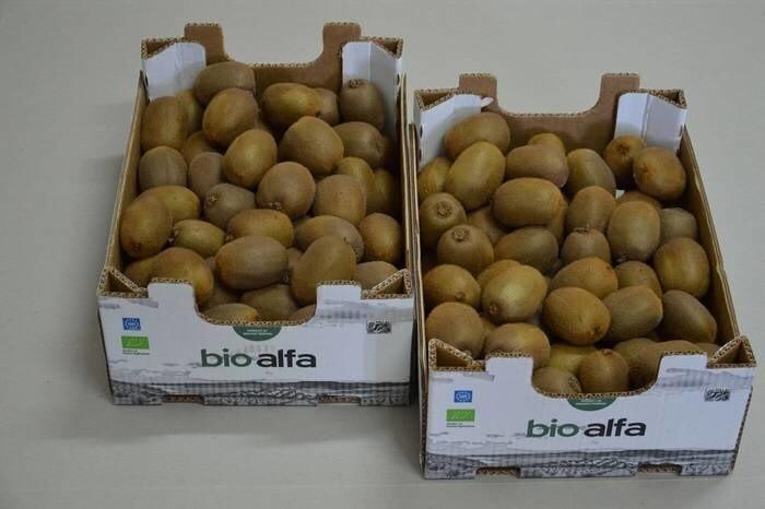 LOGO_Bio Alfa Kiwi