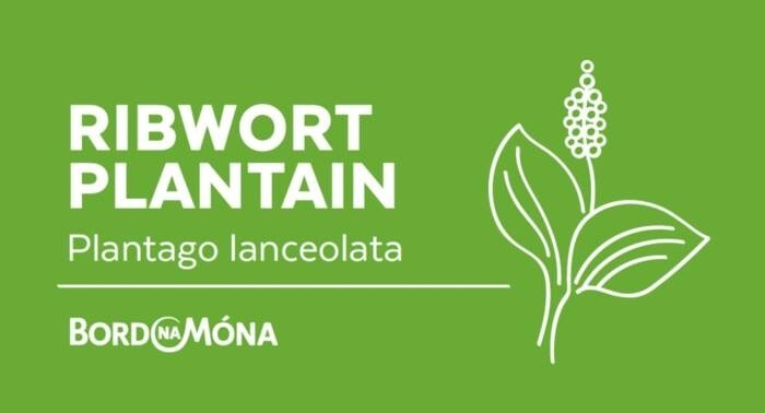 LOGO_Bord na Mona Organic Medicinal and Aromatic Plants - Plantain , Marshmallow, Valerian