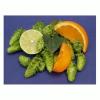 "LOGO_New German ""Special Flavor Hops"""