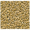 LOGO_Wheat malt