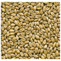 LOGO_Wheat malt