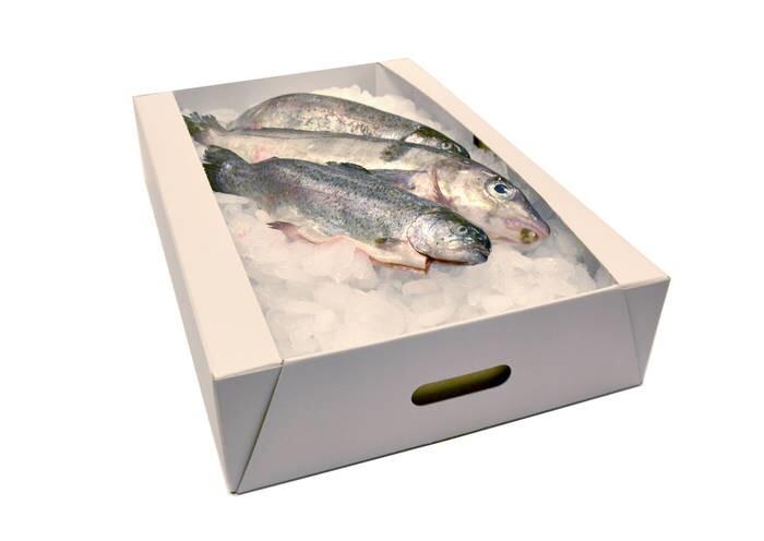 LOGO_Feuchtigkeitsunempfindliche  Fisch-Verpackung aus Vollpappe