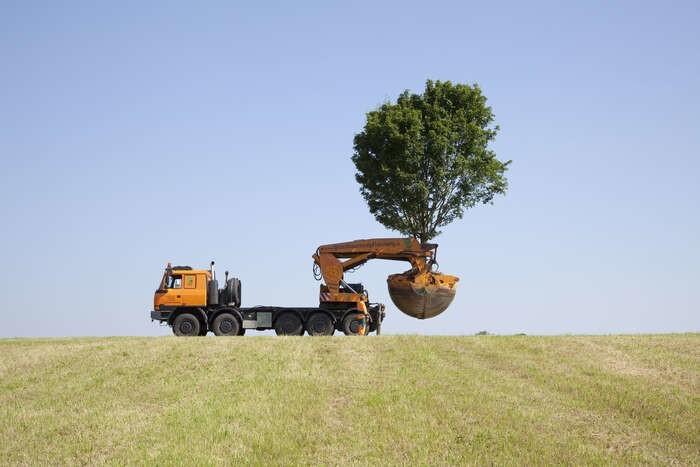 LOGO_Tree Spade Optimal 3000