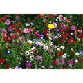 LOGO_Küpper-Blumenwiesen