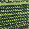 LOGO_500 Hektar Produktionsfläche