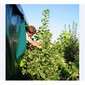 LOGO_Arbeiten in der Baumschule