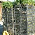 LOGO_Pflanzen für den Garten- und Landschaftsbau