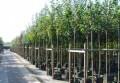 LOGO_Containerpflanzen