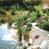 LOGO_Garten- und Schwimmteiche aus DIA-Teichbauelementen aus Ton®