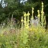LOGO_Wildsamenmischung Schmetterlings- und Wildbienensaum