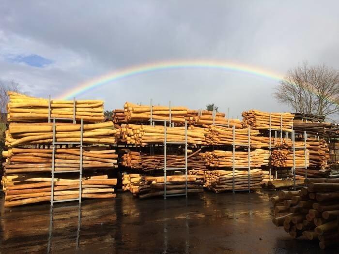 LOGO_(Robinien-)Holz als Rohware