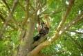 LOGO_Tree Care