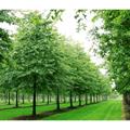 LOGO_Deciduous trees and shrubs