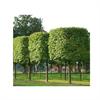 LOGO_Shaped plants