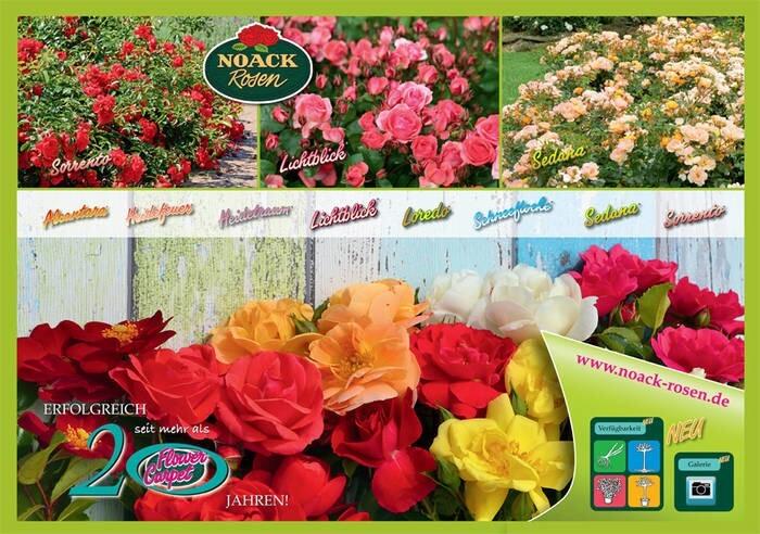 LOGO_Flower Carpet®