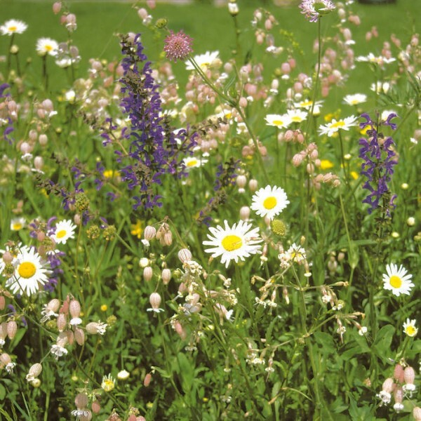 LOGO_Blumenwiese aus Wildarten