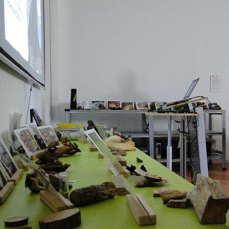 LOGO_FLL-Zertifizierter Baumkontrolleur