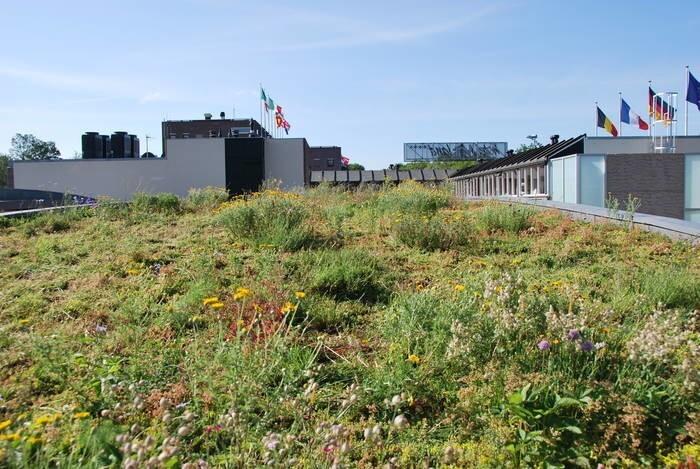 LOGO_Sedum-herb blankets for green roofs
