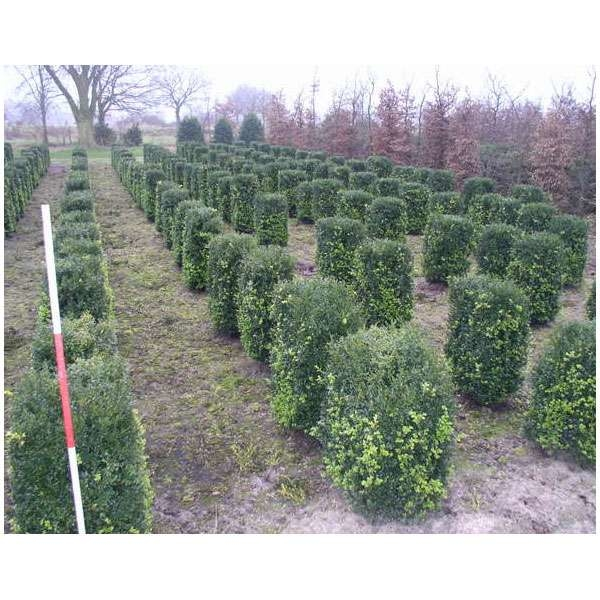 LOGO_Ready-to-plant Hedges