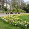 LOGO_Mechanised Planting beneath the grass