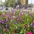 LOGO_Sommer-Trams: Pflanzfertige Sommerbeete