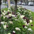 LOGO_Spring flowering bulbs