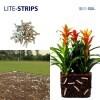 LOGO_LITE-STRIPS