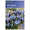 LOGO_Crocus speciosus  species Spring Beauty