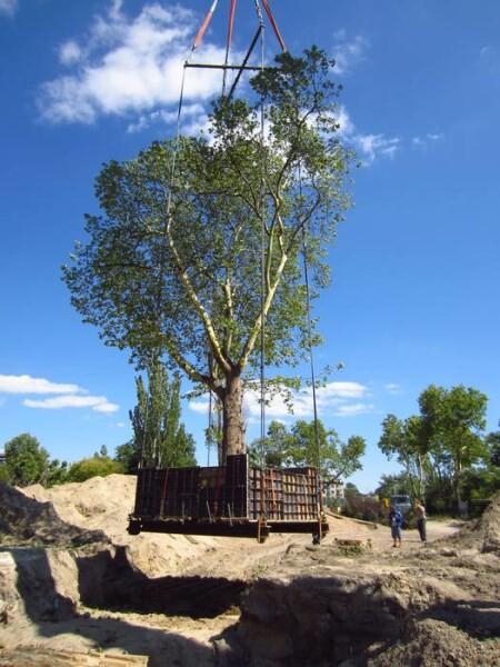 LOGO_Größtbaumverpflanzung