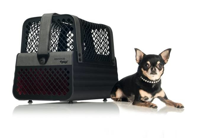 LOGO_4pets Penthouse – The transport box for small dogs