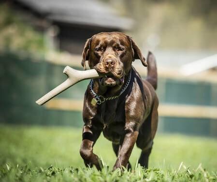 LOGO_Tutto MIo play stick