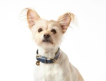 LOGO_Hundehalsband