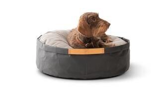 LOGO_IRVING - Paper dog cushion