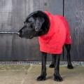 LOGO_Dog Drying Coats