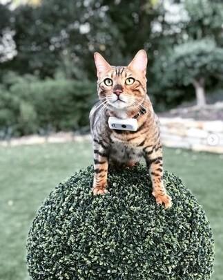 LOGO_Weenect Cats 2 – GPS-Halsband für Katzen