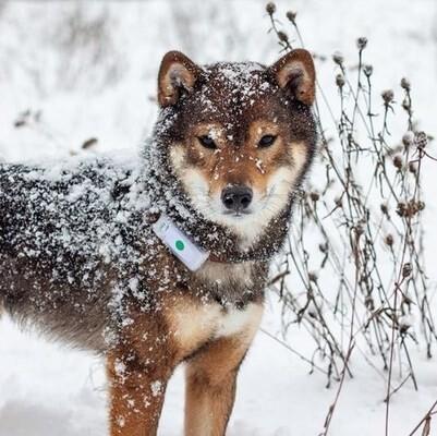 LOGO_Weenect Dogs 2 - GPS-Halsband für Hunde