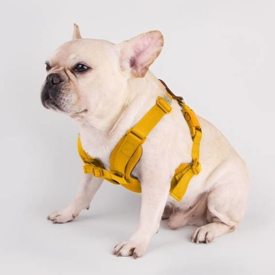 LOGO_Pet Harness