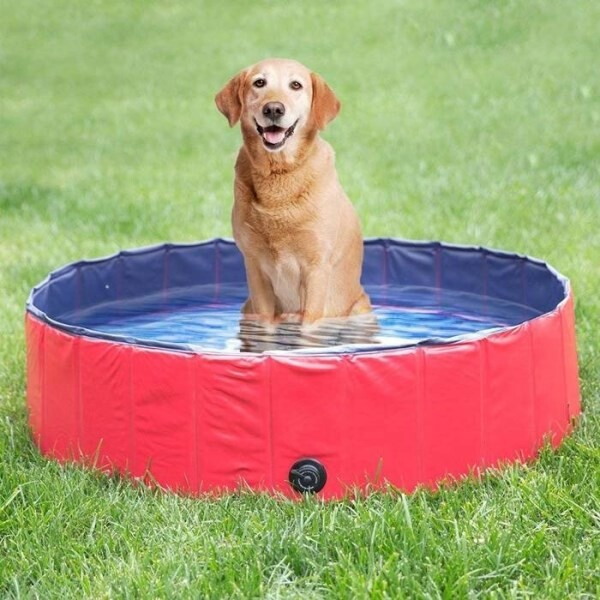 LOGO_dog swimming pool TM-PSW01