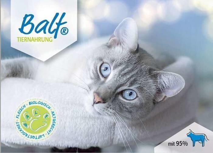 LOGO_BALF Katze