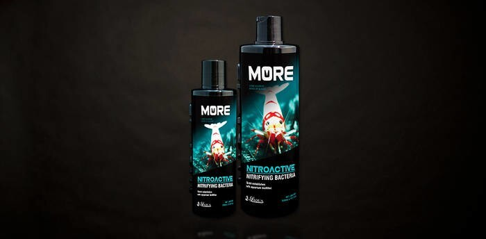 LOGO_MORE Nitroactive for Bee Shrimp