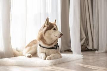 LOGO_Soothing Sleeping Pet Mat
