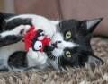 LOGO_Rogz Plush Fluffy Grinz Cat Toys