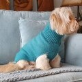 LOGO_The Charlie Dog Jumper