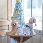 LOGO_Hund Kleid