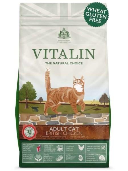 LOGO_ADULT CAT BRITISH CHICKEN