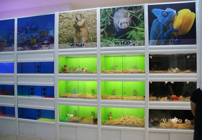 LOGO_SMALL RODENTS DISPLAY