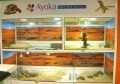 LOGO_REPTILES DISPLAY