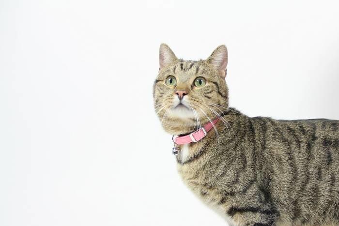 LOGO_Cat collars