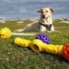 LOGO_Hundespielzeug zum üben