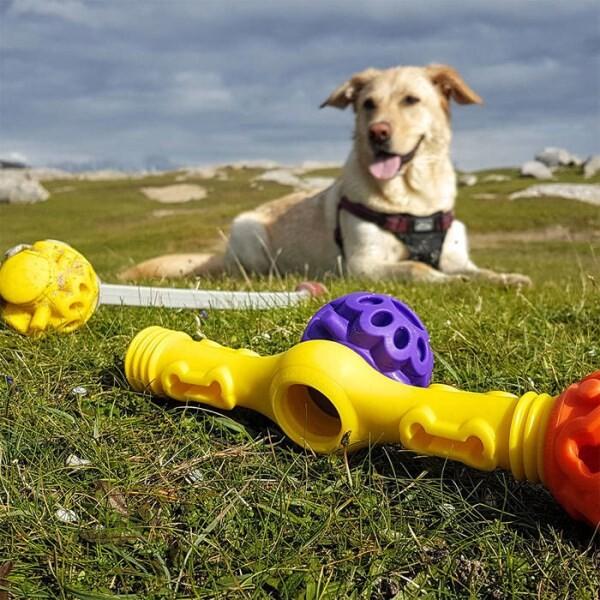 LOGO_Exercise dog toys
